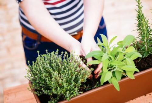 Kräuter-pflanzen-Balkon-©-martiapunts-Fotolia-621480691